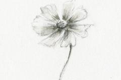 一つの花001